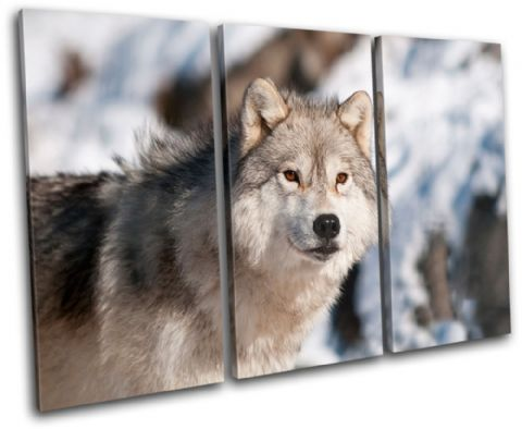 Wolf Wildlife Animals - 13-1058(00B)-TR32-LO